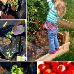 Tips and Tricks for Growing Tomatoes