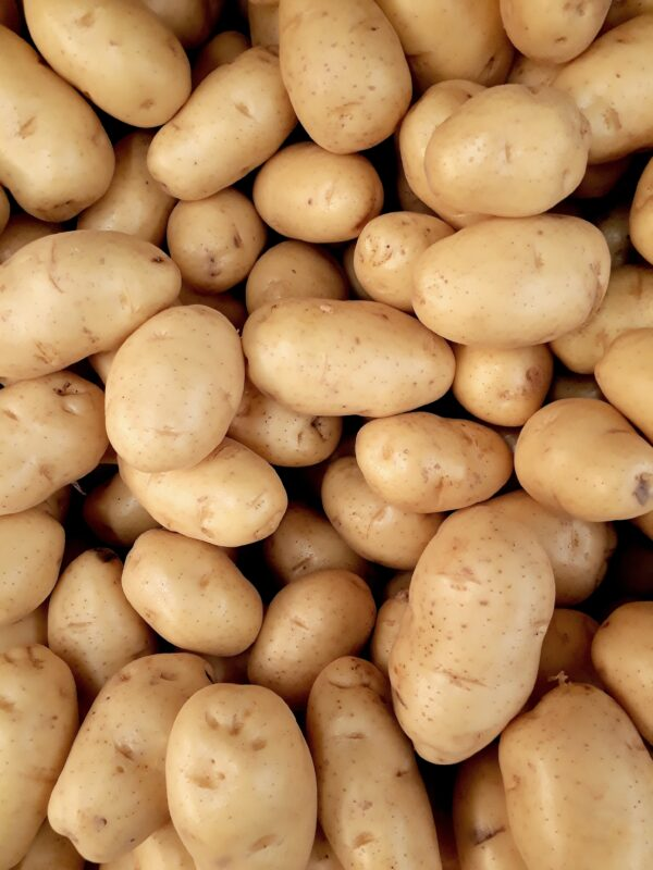 A mound of Russet potatoes